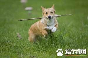 a_如何纠正小狗的坏习惯  纠正狗狗坏习惯训练方法[新闻]