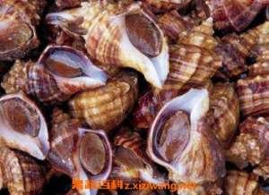 海螺怎么洗最快最干净 快速洗干净海螺的方法技巧