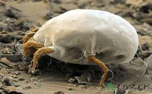资讯生活脸上的螨虫如何去除 螨虫的危害